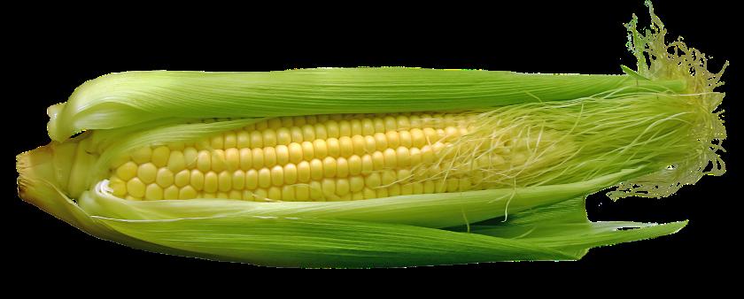 corn-667678_1920.png