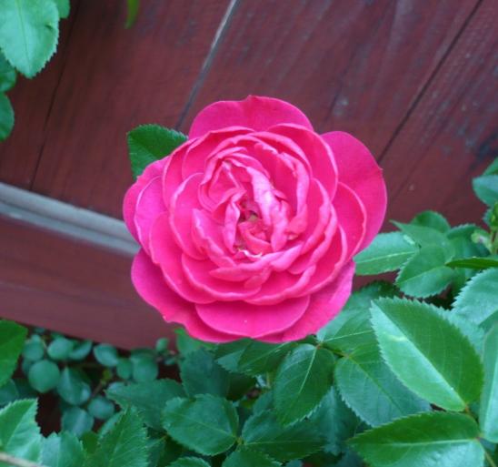 flower2.1