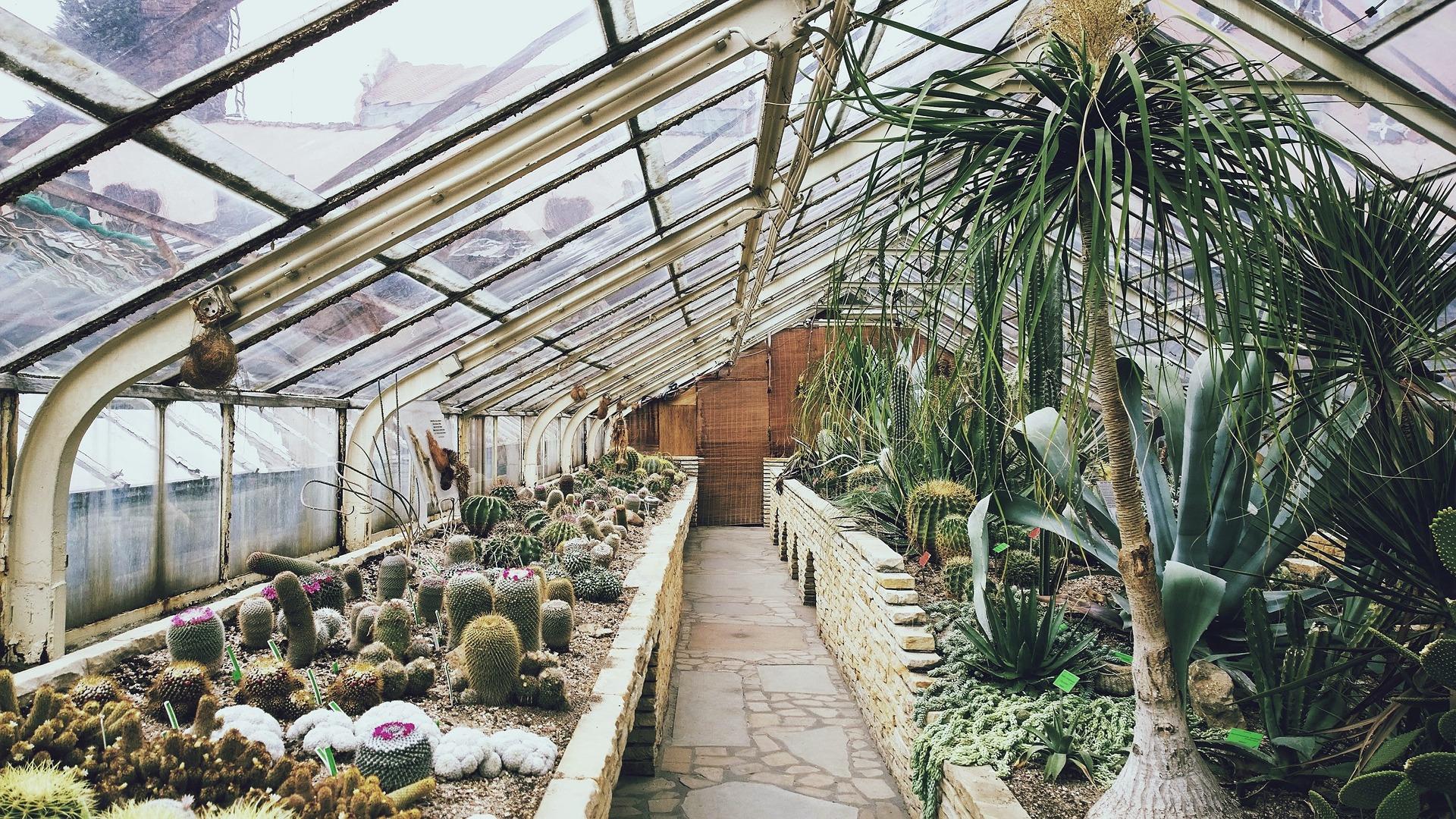 greenhouse-768740_1920