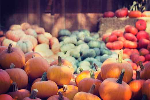 abundance agriculture close up farming