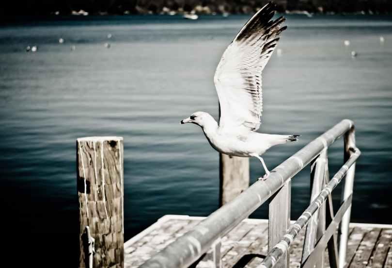 sea flight bird flying