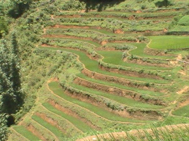 rice patties- Sapa Mountains Lo Cai